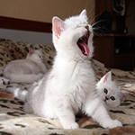 для котят до 1 года