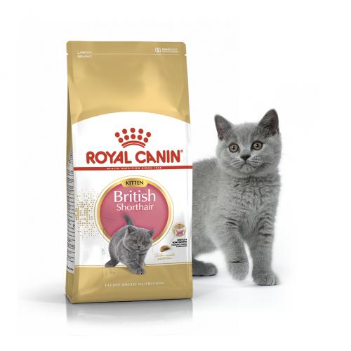 "British Shorthair Kitten - Корм для котят породы британская короткошерстная ""Роял Канин Киттен"""