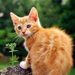 для кошек, бывающих на улице
