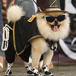 Одежда и обувь для собак